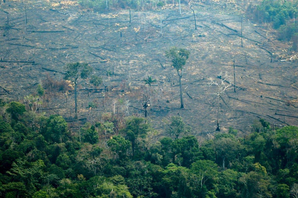 Incendies dévastateurs en Amazonie