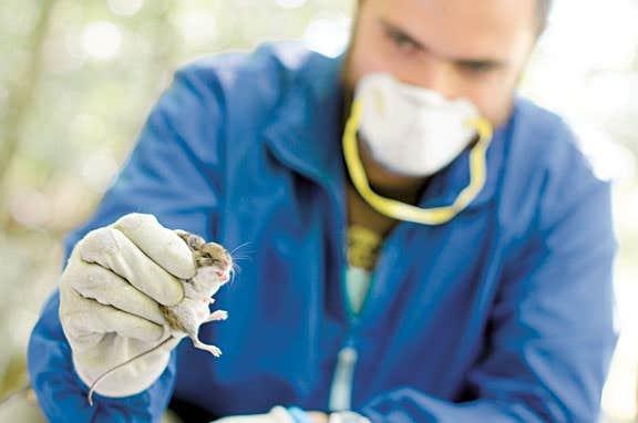 Sur leurs 15 sites d'échantillonnage, les chercheurs ont recueilli plus de 2000 tiques en 2013, contre 449 l'année précédente.