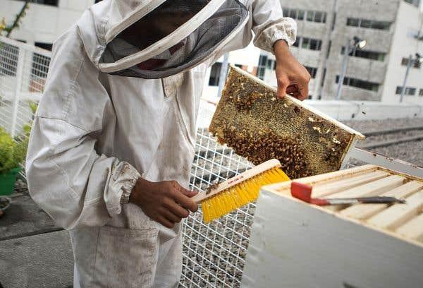 Les agronomes québécois à la rescousse des abeilles