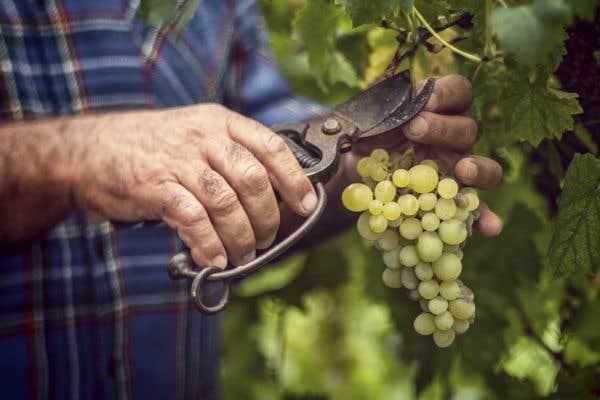 La récolte française revue en hausse