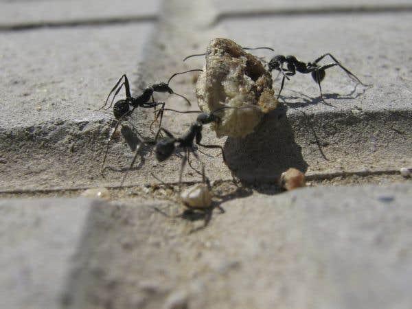 Le mythe de la cigale et la fourmi