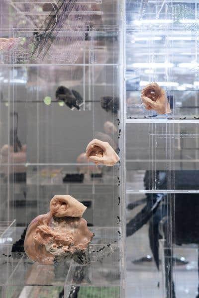 Quelque 125 000 visiteurs sont passés par le Musée d'art contemporain de Montréal pour voir les oeuvres de David Altmejd.