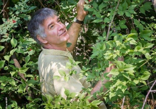 Jacques Brodeur, entomologiste à l'Institut de recherche en biologie végétale de l'Université de Montréal.