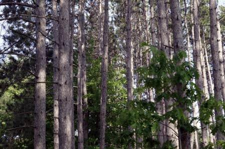 Les chercheurs ont r&eacute;cemment d&eacute;couvert une fibre particuli&egrave;re du bois: la nanocellulose cristalline.<br />