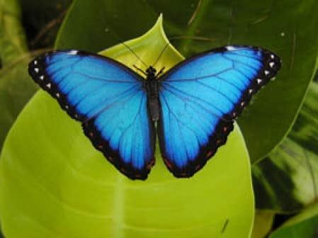 Des papillons dans les yeux le devoir for Papillon jardin botanique 2015