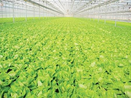 agriculture les producteurs en serre veulent de. Black Bedroom Furniture Sets. Home Design Ideas