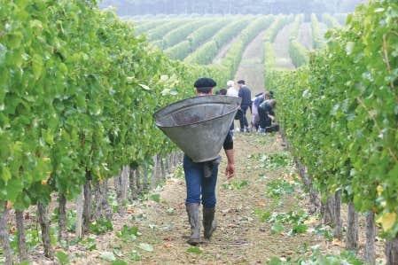 En 1980, on réintroduisait en Saint-Mont les ceps ancestraux pour faire du saint mont un vin original.
