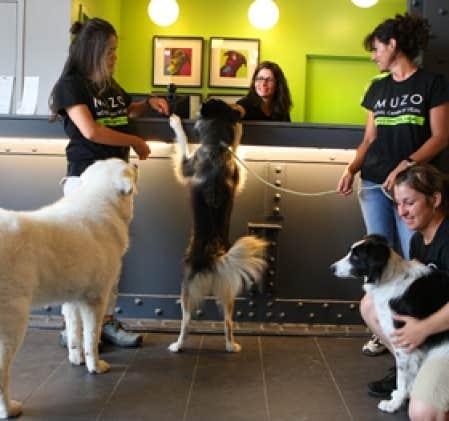 Macadam suite pour chien seul le devoir for Hotels qui acceptent les chiens