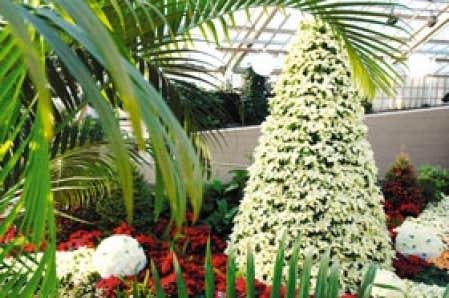 La fine fleur de no l le devoir for Jardin wesserling noel