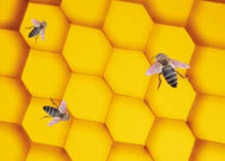 l o les antibiotiques chouent le miel fait des miracles le devoir. Black Bedroom Furniture Sets. Home Design Ideas