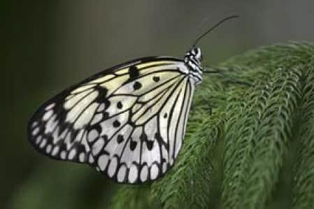 Papillons en libert au jardin botanique le bal volant for Papillons jardin botanique 2016