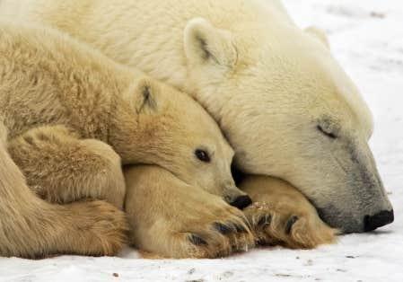 Le Canada doit réorienter plusieurs de ses politiques pour qu'elles concourent à sauver les régions nordiques du réchauffement climatique.