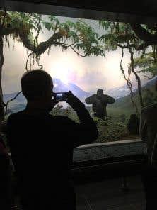 La nuit, les dioramas, ces représentations de scènes de la vie sauvage mêlant l'art et les animaux naturalisés, se révèlent dans la tranquillité du musée.
