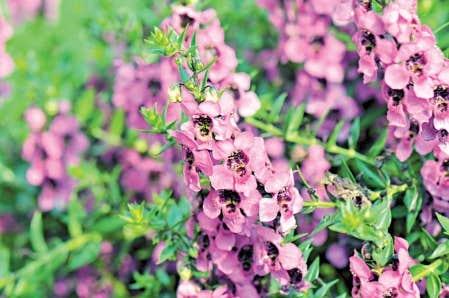 Un programme d 39 annuelles exceptionnelles le devoir - Plante qui aime le soleil ...
