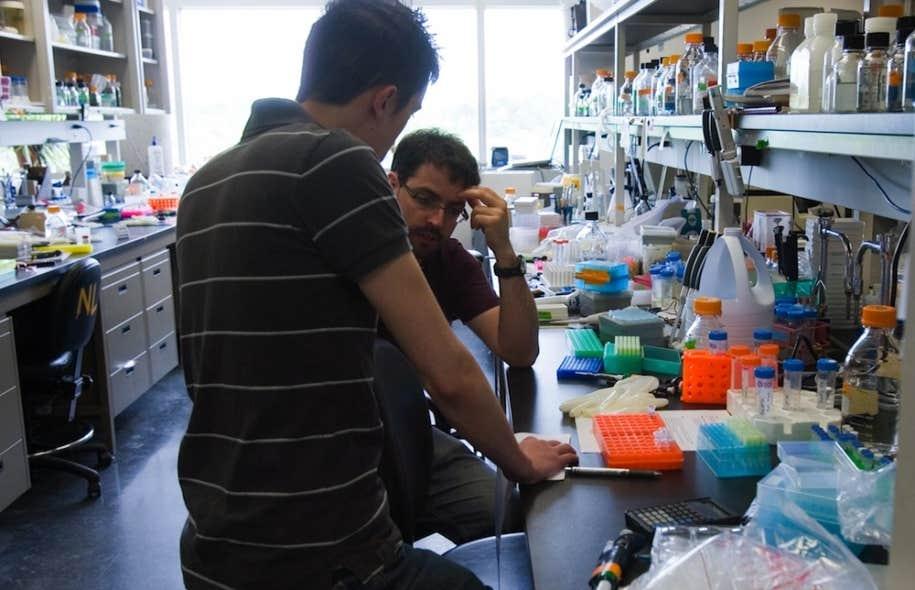 Photo d'archives d'un laboratoire de recherche. Le Fonds de recherche du Québec verra son budget 2013-2014 amputé de 31,2 millions de dollars.