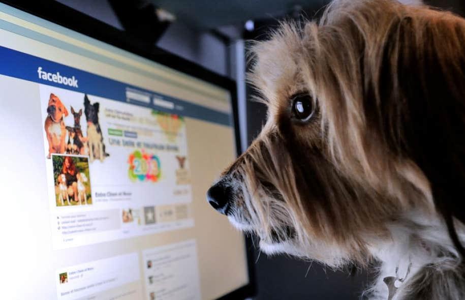 image de chien sur facebook