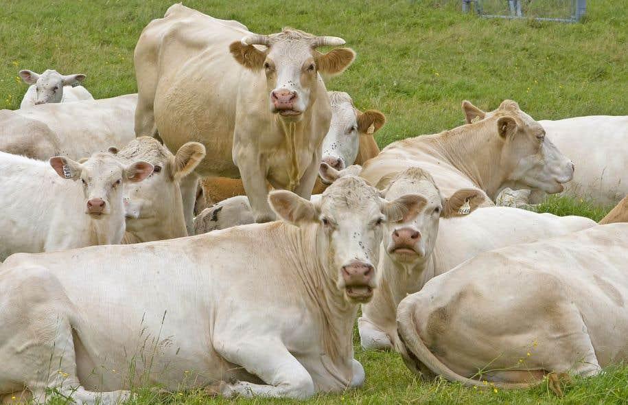 Les agriculteurs exigent que le gouvernement fédéral s'engage de nouveau à défendre la gestion de l'offre dans toutes les négociations commerciales auxquelles il prend part.