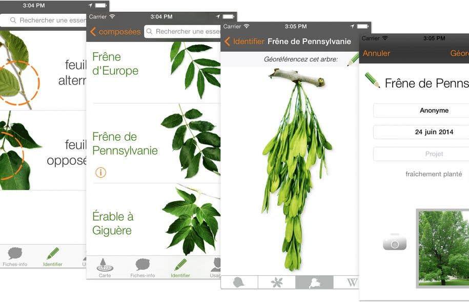 Des applications utiles pour identifier les v g taux le for Noms de plantes avec photos