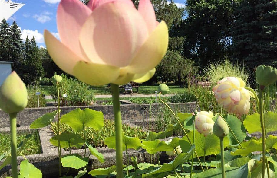 Un bouquet pour les 40 ans le devoir for Amis jardin botanique