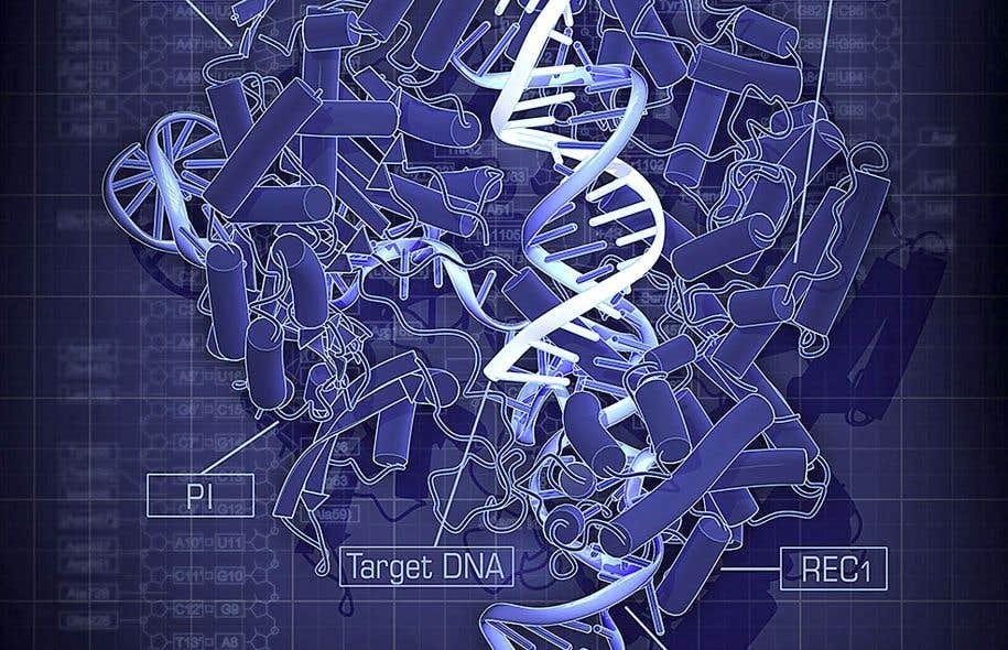 Une structure du Cas9 de S. pyogenes (une bactérie appartenant au genre «Streptococcus») dans un complexe avec notamment son ADN cible