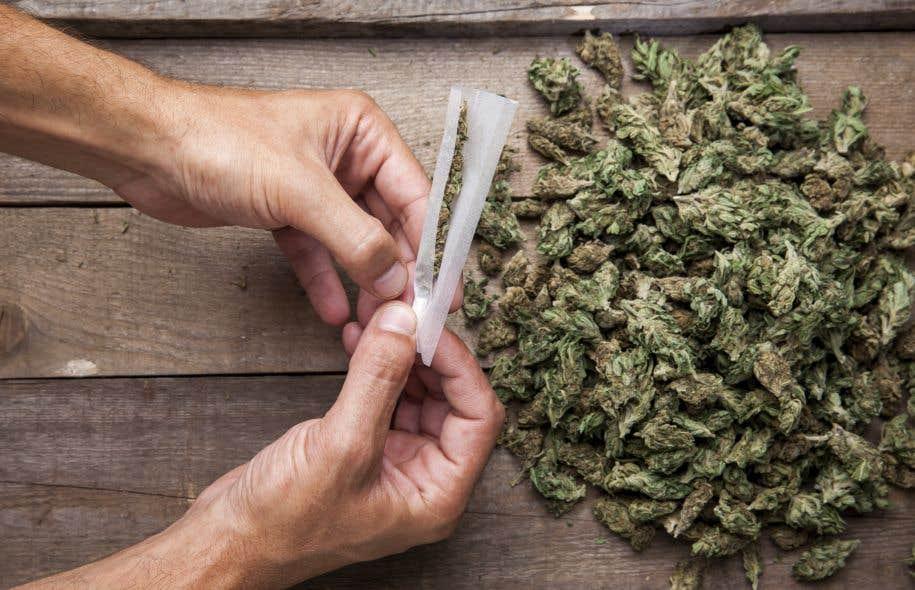 La France est l'un des pays les plus touchés en Europe, selon l'Observatoire français des drogues et des toxicomanies. En 2014, 17 millions de Français déclaraient avoir déjà pris du cannabis.