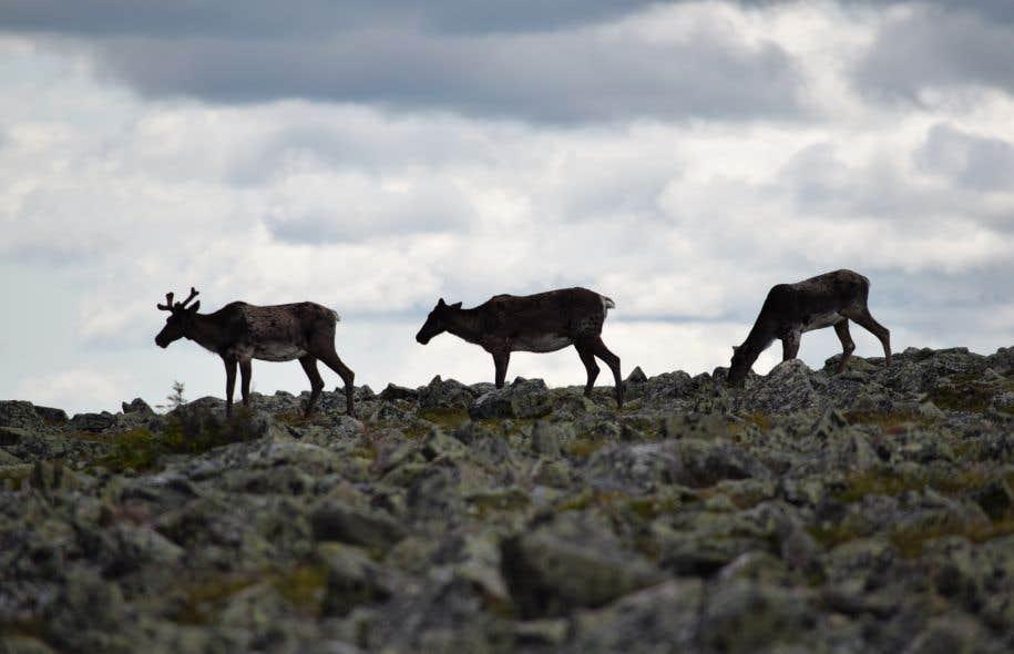 Ils étaient à peine cinq au sommet du mont Jacques-Cartier lors du passage du «Devoir» sur la plus haute montagne du sud du Québec.