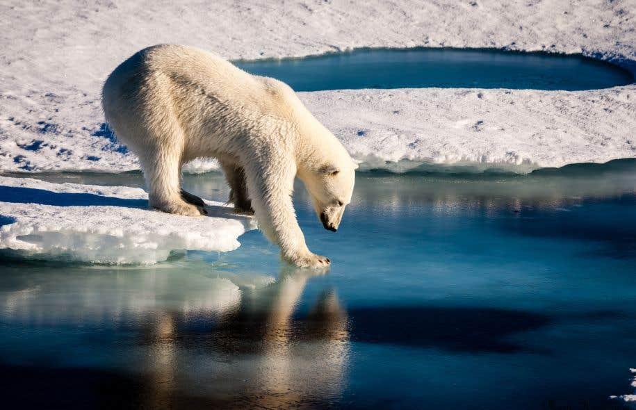 Assez Nouveau plan d'Obama pour protéger les ours polaires | Le Devoir IP96