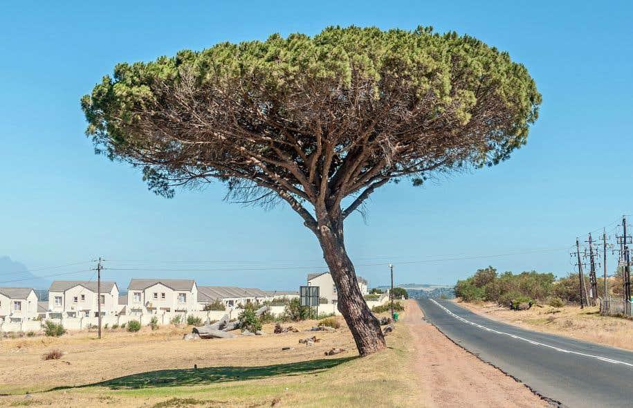 L'histoire de «Je m'appelle Nathan Lucius» est plantée dans les banlieues du Cap, en Afrique du Sud.