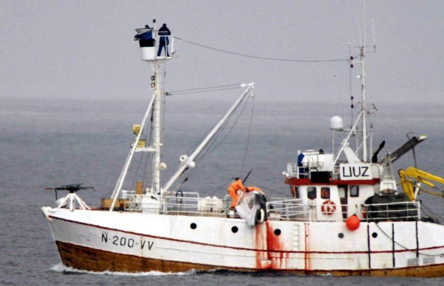 <p>La Norvège est l'un des deux pays tuant chaque année des baleines dans l'océan Atlantique.</p>