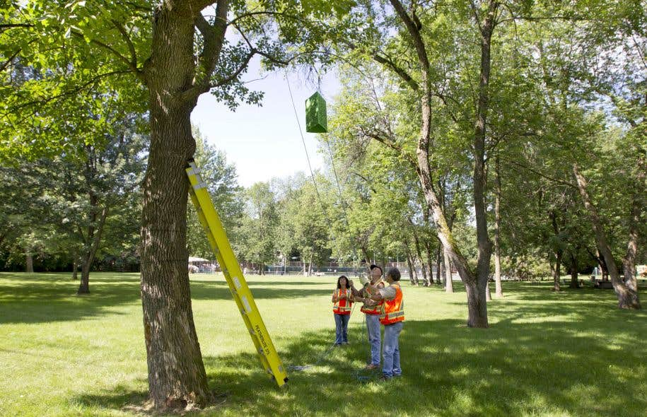 La Ville poursuit le traitement des frênes afin de les protéger contre l'agrile. Au cours de l'été 2016, quelque 27 500 frênes ont été traités, et 37 000 autres le seront en 2017.