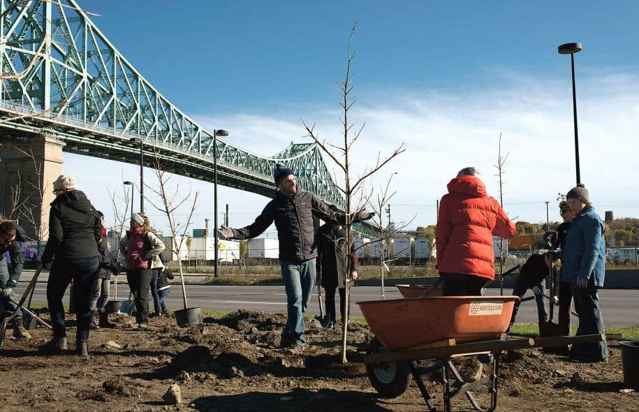 Des arbres ont été plantés un peu partout dans la grande métropole dans le cadre du programme «375 000 arbres pour le 375e anniversaire de Montréal», un projet lancé en 2014 par l'organisme Jour de la Terre Québec.