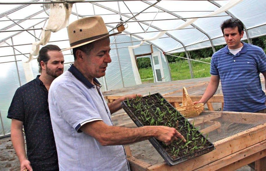 Ramzy Kassouf explique les différentes étapes du travail dans les champs, des semis jusqu'à la culture en sol.