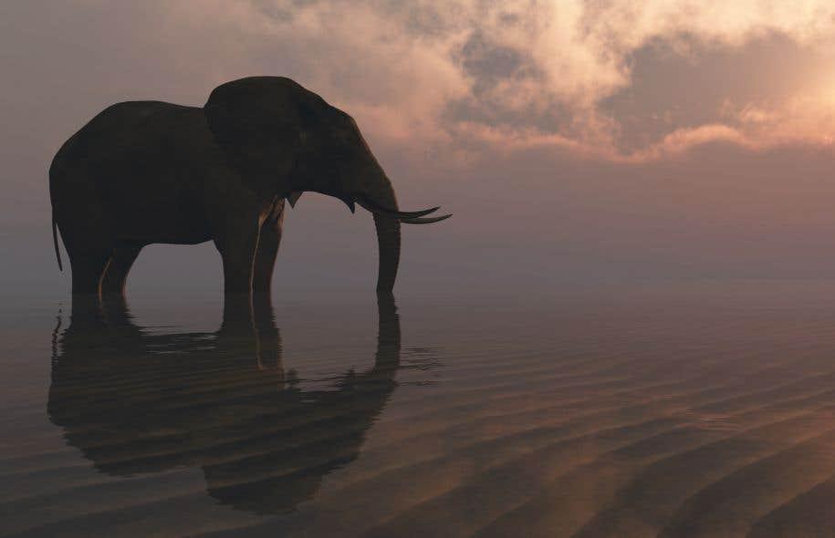 Dans «Un éléphant à la mer», où un pachyderme est offert par l'Inde à la princesse du Maroc, Tharoor traduit le désarroi des êtres arrachés à leur culture en s'attardant aux états d'âme d'une bête rêvant de s'abîmer dans la mer plutôt que de vivre loin des siens.