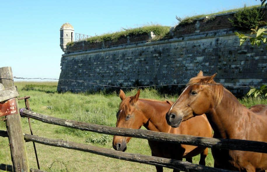 Un aperçu du rempart de Brouage et d'une échauguette où deux chevaux paissent paisiblement.
