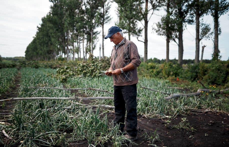 Denys Van Winden regarde avec désolation ses champs d'oignons détruits. Il espère que le gouvernement tiendra compte du caractère exceptionnel de la tempête de vendredi.
