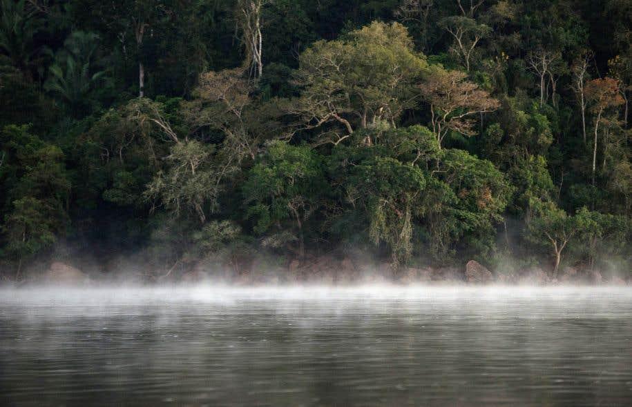 Le gouvernement brésilien est régulièrement accusé par des ONG de brader la forêt amazonienne sous la pression des lobbies agricole et minier.