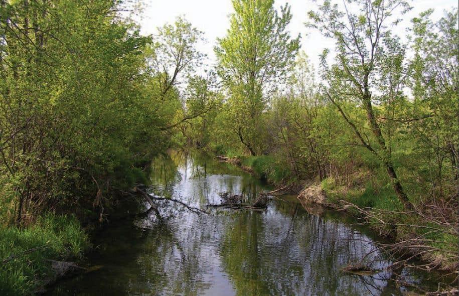 Le lieu du projet est l'un des derniers grands espaces verts de l'île de Montréal.
