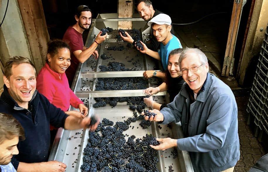 Des pinots noirs du Bollenberg sur table de tri au Domaine Zusslin: le chroniqueur (premier à droite) n'est pas là pour s'amuser, mais pour bosser!