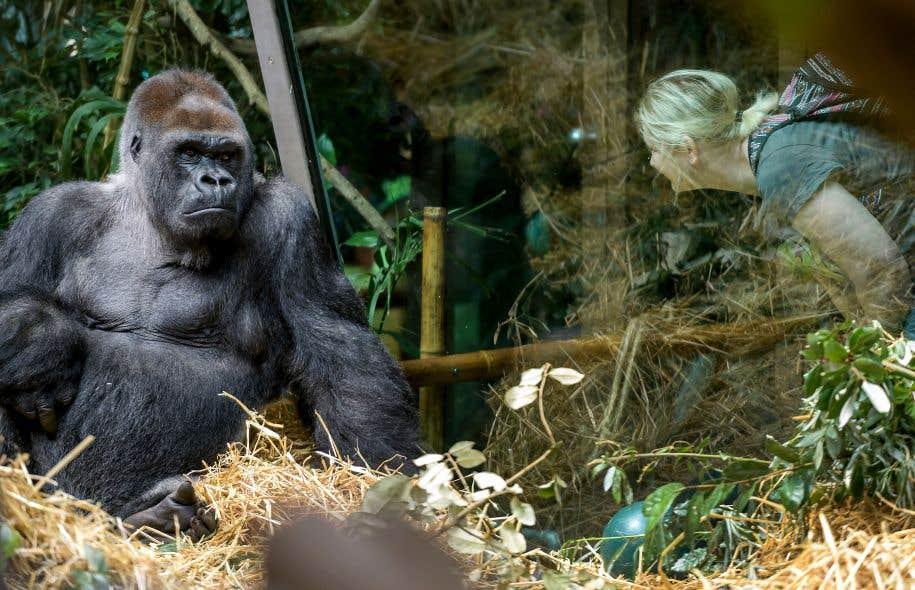 Prisonnier de barreaux invisibles, l'humain ignore qu'il est captif lui aussi. Ishmael, le gorille, l'aide à saisir les limites de sa conquête.