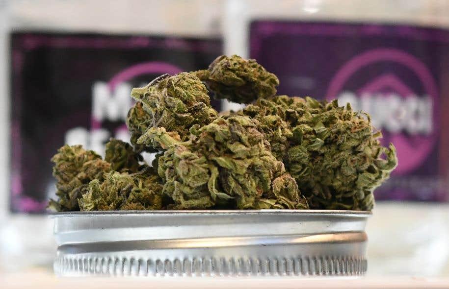 Trouver une boutique qui vend du cannabis non médicinal en Californie demeure plutôt compliqué pour le moment.