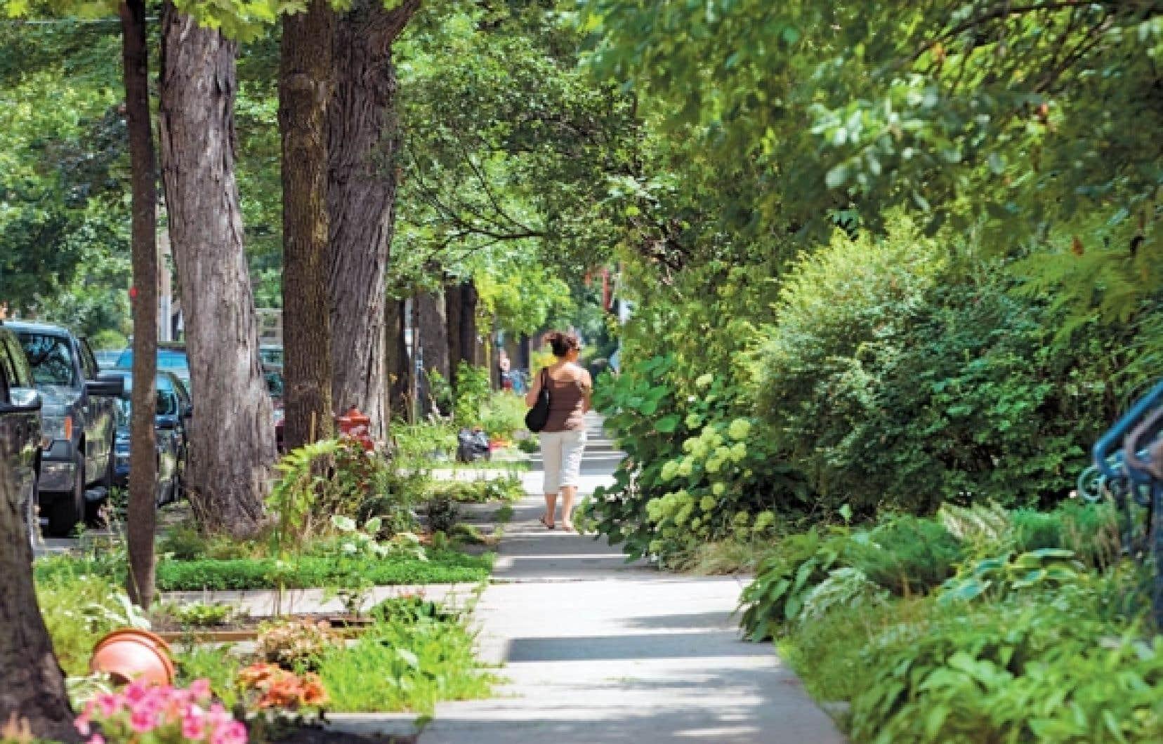 La biodiversité montréalaise n'est pas que l'affaire du mont Royal et autres parcs-nature. Les rues de la métropole en plein été en sont de bons exemples.<br />