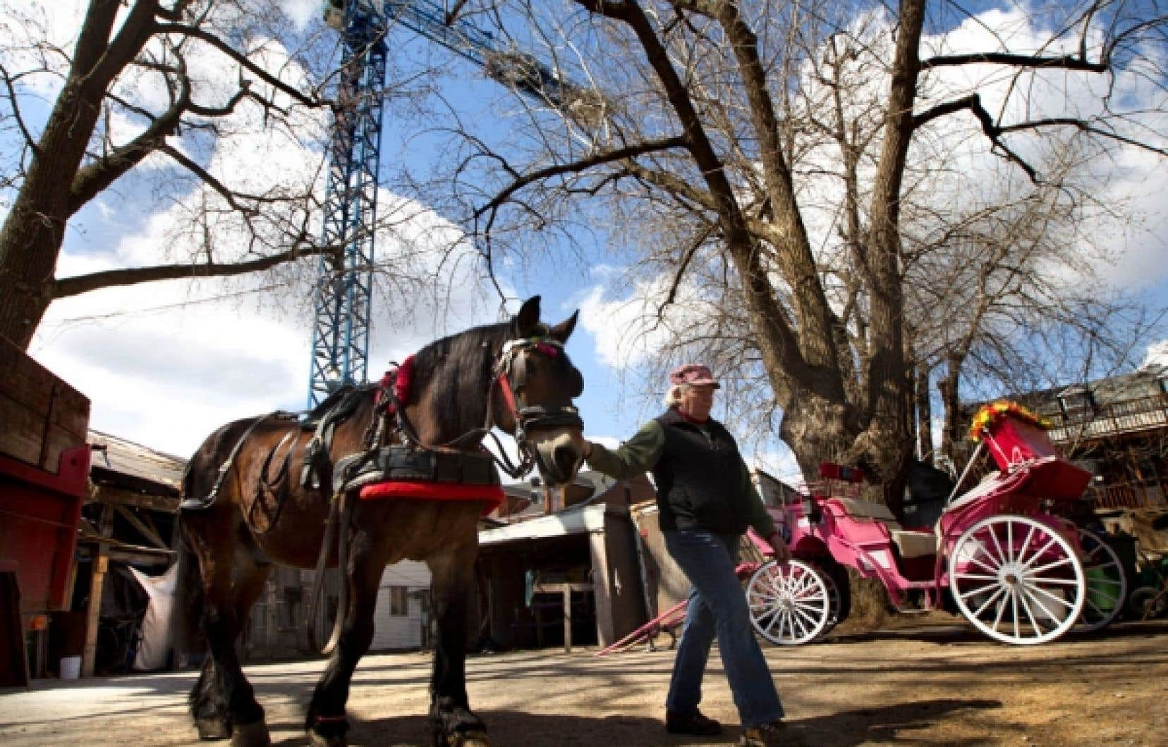 Le Horse Palace, qui n'abrite plus de huit chevaux, a été vendu à deux promoteurs immobiliers.<br />