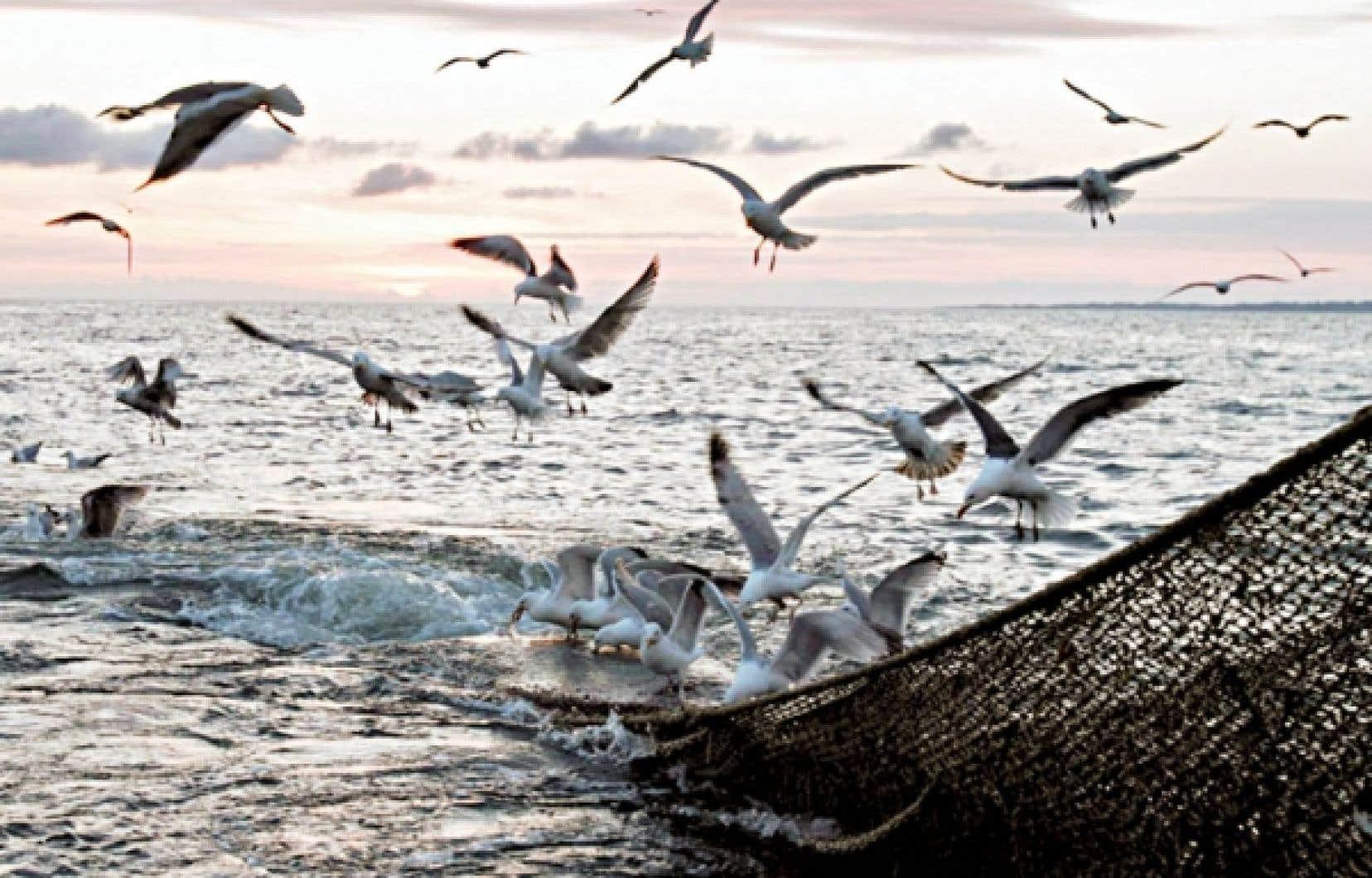 <div> Des goélands bataillent au-dessus du filet d'un chalutier pêchant dans l'Atlantique. Après la surpêche, la pollution serait le deuxième facteur de «mise en danger» des ressources halieutiques.</div>