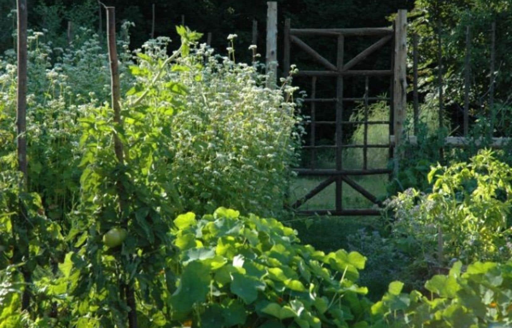 Un sol bien préparé donne de belles récoltes et la clôture anti-chevreuils nous assure d'en profiter!