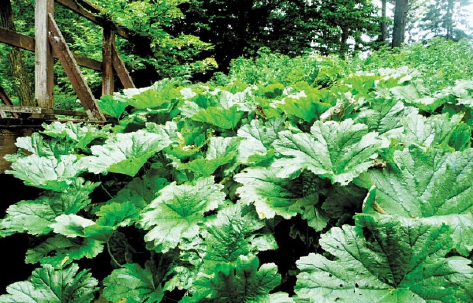 Plante Exterieur Qui Aime L Eau les géantes du jardin | le devoir