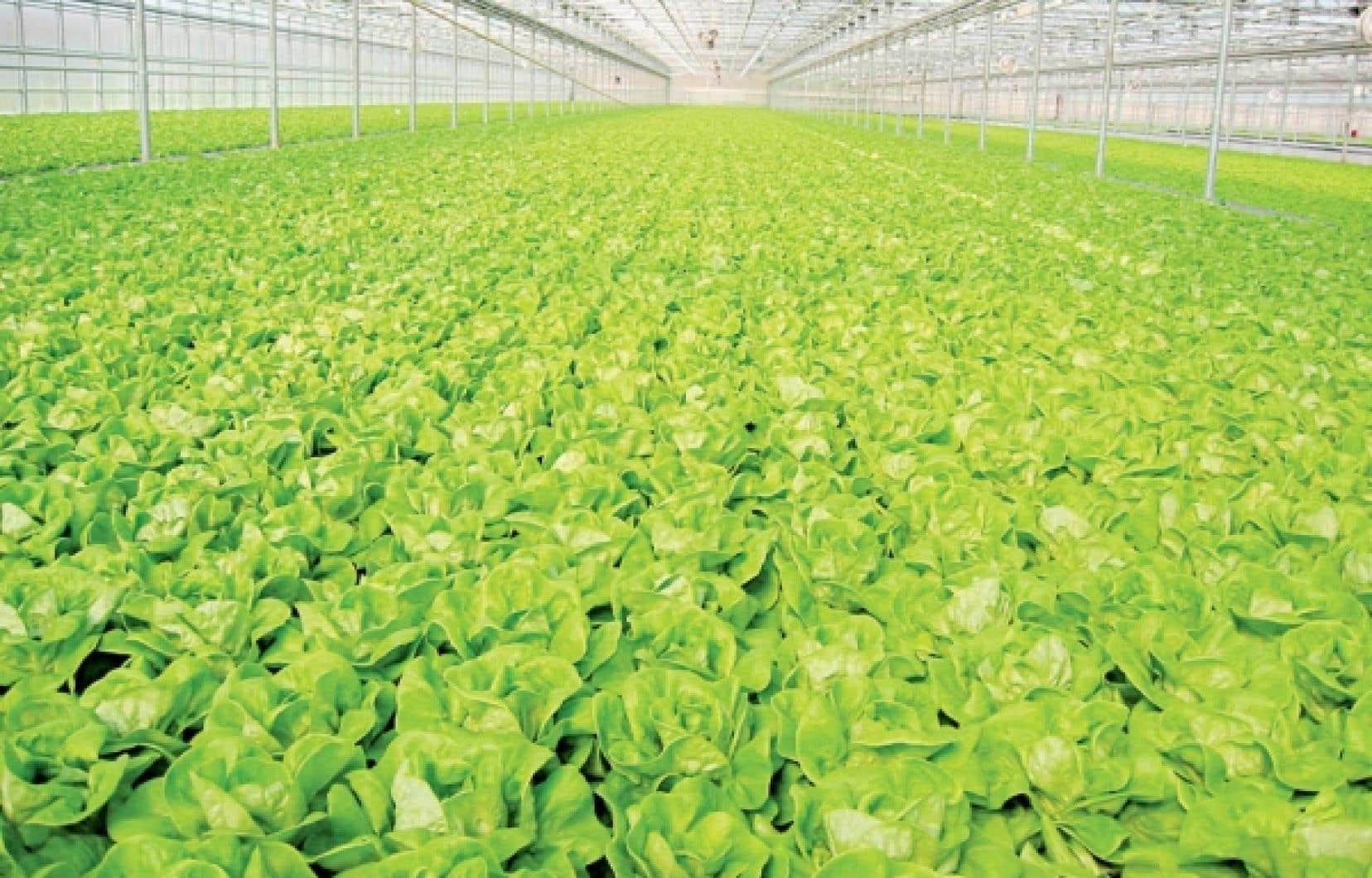 agriculture les producteurs en serre veulent de meilleurs tarifs d lectricit le devoir. Black Bedroom Furniture Sets. Home Design Ideas