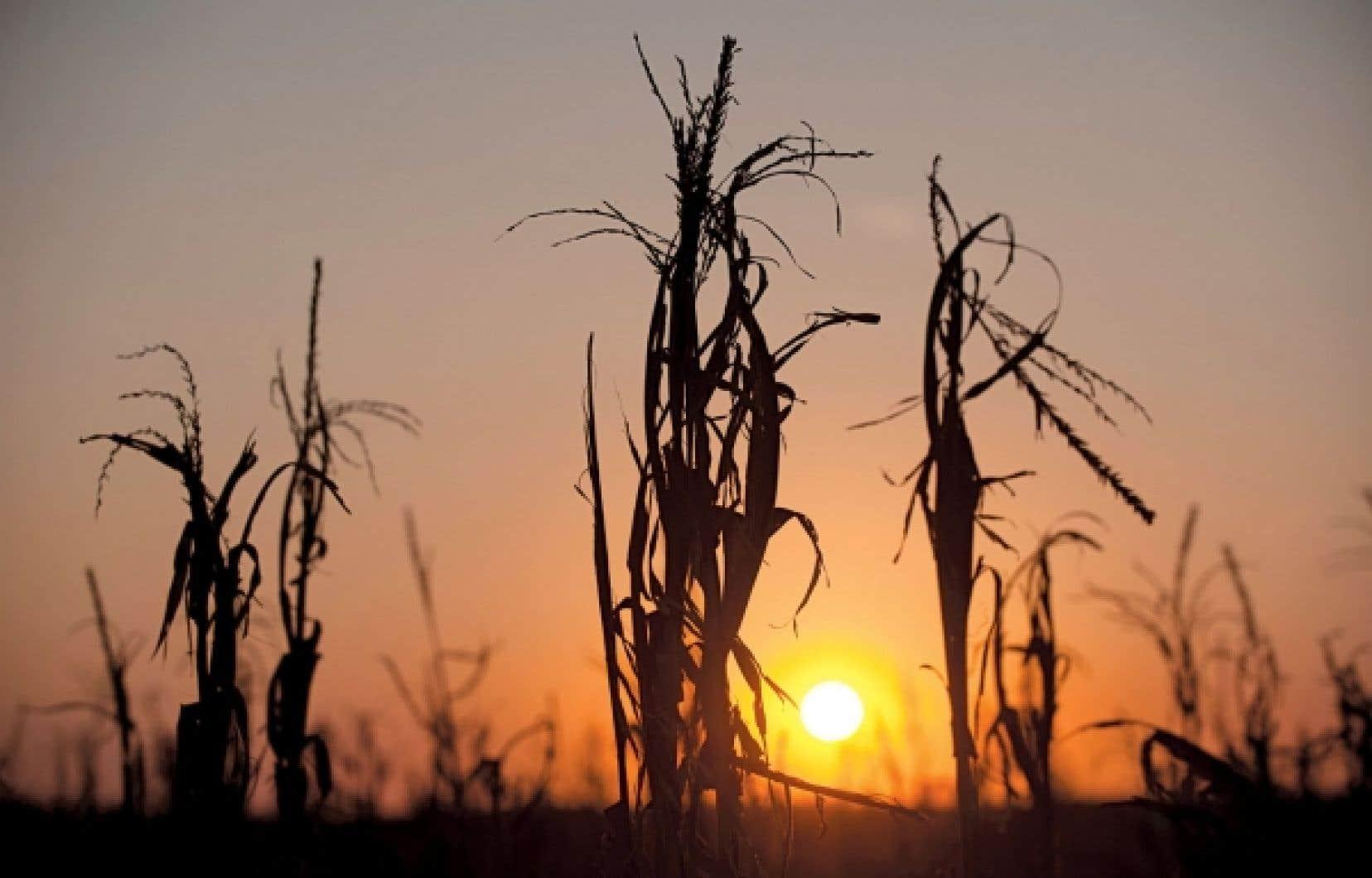 La Banque mondiale rapportait la semaine dernière que les prix alimentaires mondiaux ont augmenté de 10 % seulement au cours du petit mois allant de juin à juillet. Cette hausse, principalement attribuée à des sécheresses aux États-Unis ainsi que dans d'autres grands pays producteurs d'Europe de l'Est, comme la Russie et l'Ukraine, a atteint 25 % pour le blé, 17 % pour le soja et 25 % pour le maïs.