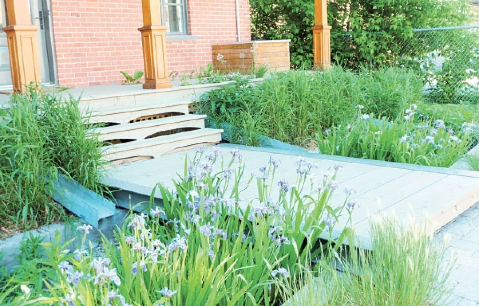 Devant son bureau de Laval, le Groupe Rousseau Lefebvre a aménagé un jardin de pluie avec des plantes indigènes.