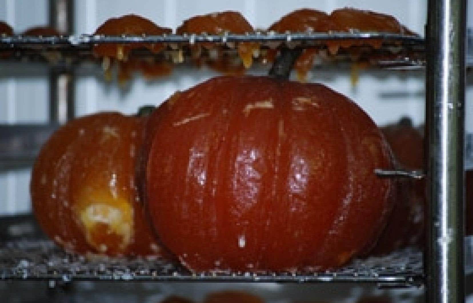 Depuis plusieurs générations, la famille Richaud perpétue la tradition du fruit confit selon les règles de l'art, respectant les diverses phases de confiserie des fruits frais.