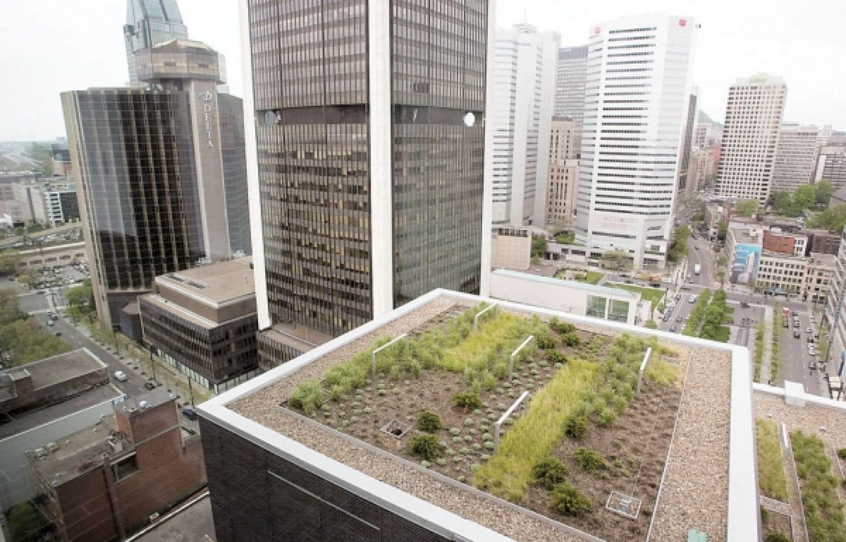 Le fondateur et directeur général de Renaissance, Pierre Legault, apprécie un certain modernisme propre à Montréal, représentée entre autres par des initiatives comme Équiterre ou Communauto ou le récent engouement des Montréalais pour l'agriculture urbaine.